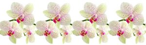 Lid_fartuk_abs_orchid_white_1