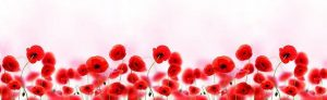 Lid_fartuk_abs_poppies_1
