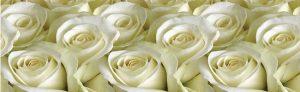 Lid_fartuk_abs_rose_white_1