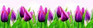 Lid_fartuk_abs_tulip_1