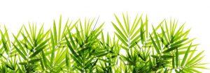VladEk_ecran_Standard_plus_bamboo_leaves