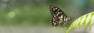 VladEk_ecran_Standard_plus_butterfly