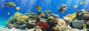 VladEk_ecran_Standard_plus_corals