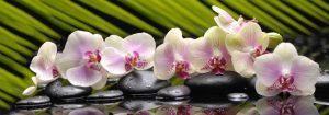 VladEk_ecran_Standard_plus_orchid_on_rocks
